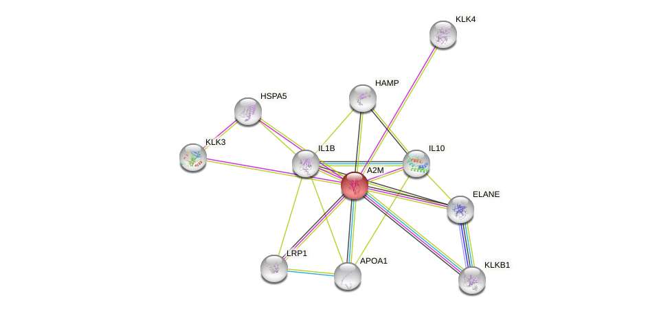 Protein-Protein network diagram for A2M