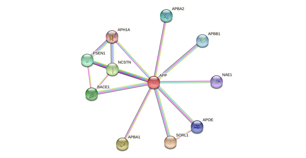 Protein-Protein network diagram for APP