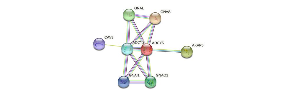 Protein-Protein network diagram for ADCY5