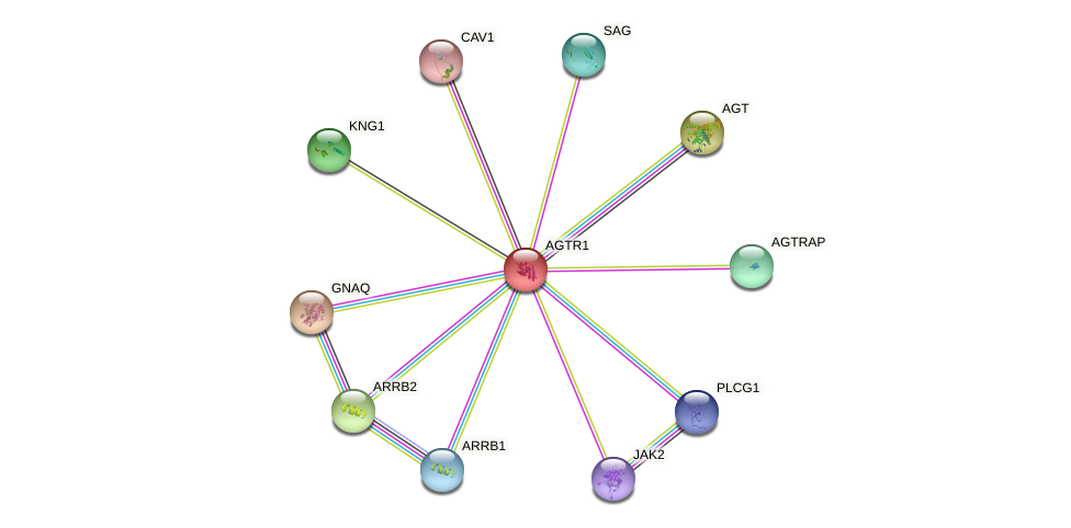Protein-Protein network diagram for AGTR1