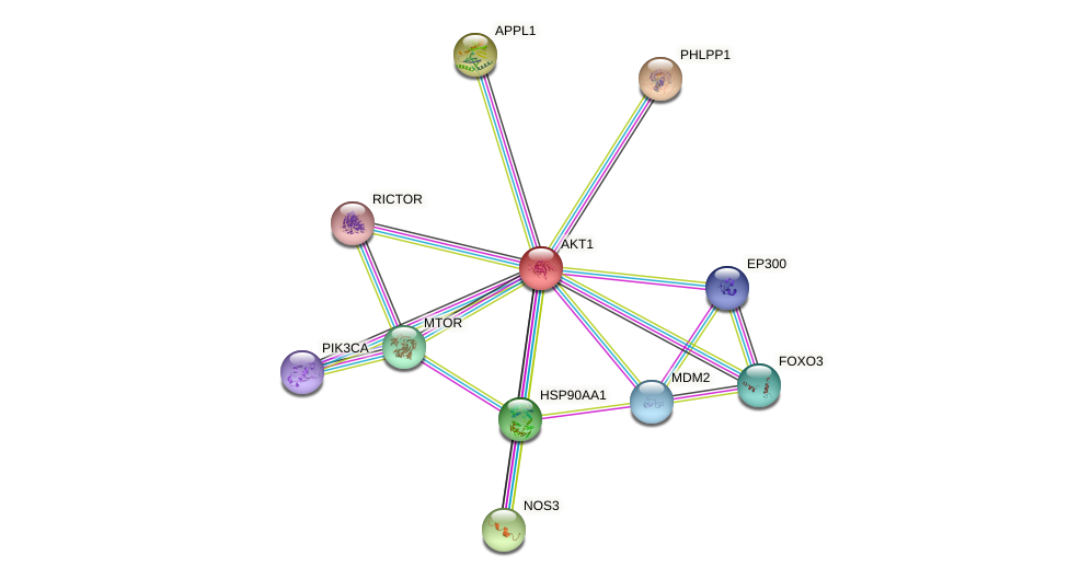 Protein-Protein network diagram for AKT1