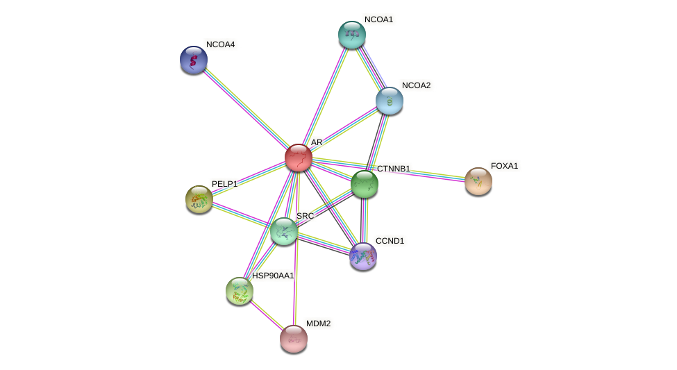 Protein-Protein network diagram for AR