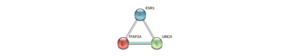 Protein-Protein network diagram for TFAP2A
