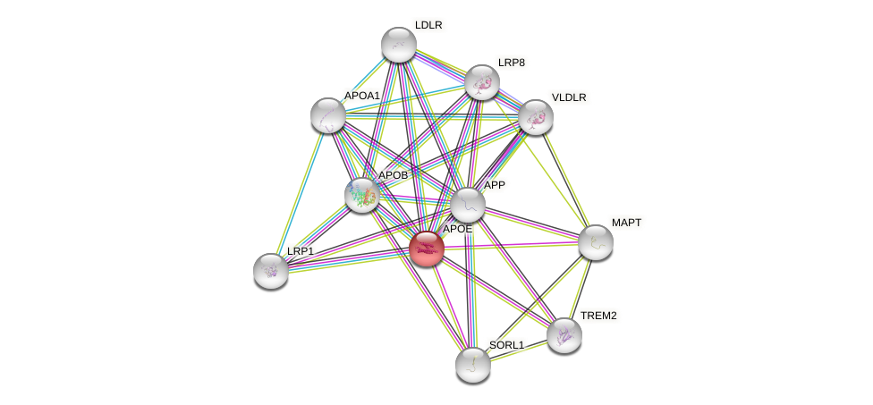 Protein-Protein network diagram for APOE
