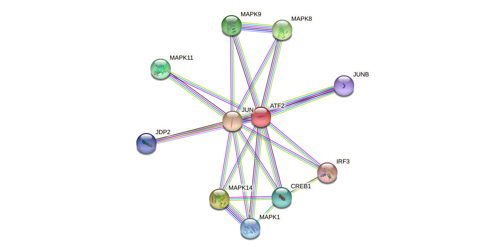 Protein-Protein network diagram for ATF2