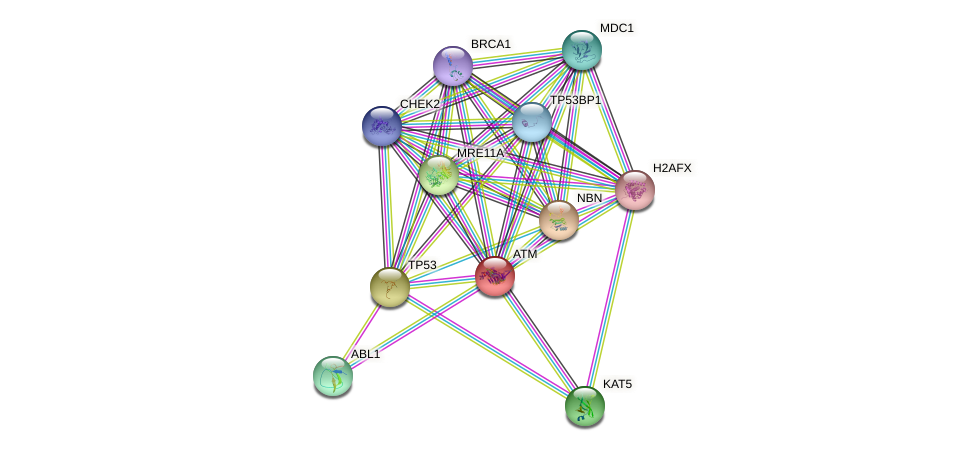 Protein-Protein network diagram for ATM