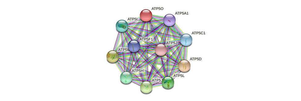 Protein-Protein network diagram for ATP5O