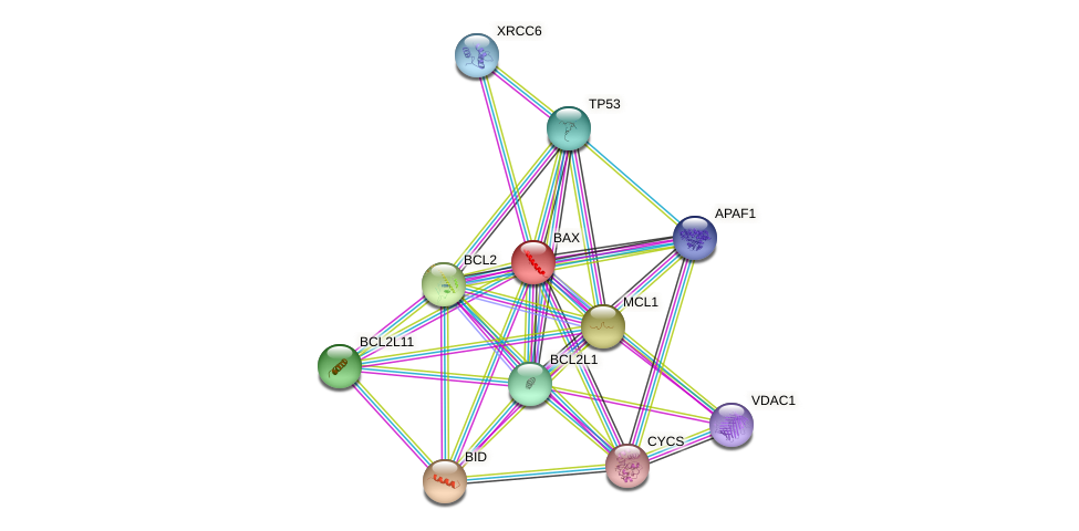 Protein-Protein network diagram for BAX