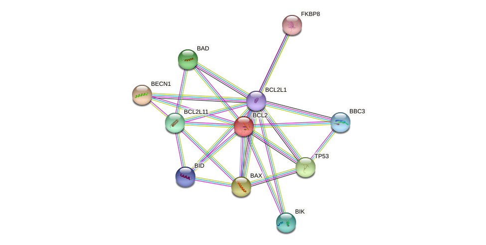 Protein-Protein network diagram for BCL2