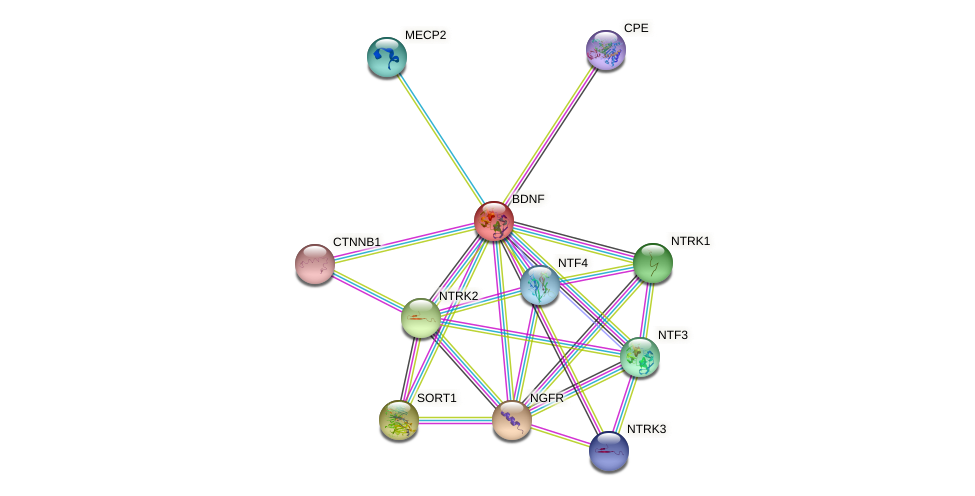 Protein-Protein network diagram for BDNF