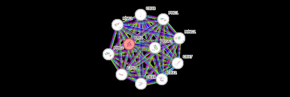 Protein-Protein network diagram for BMI1