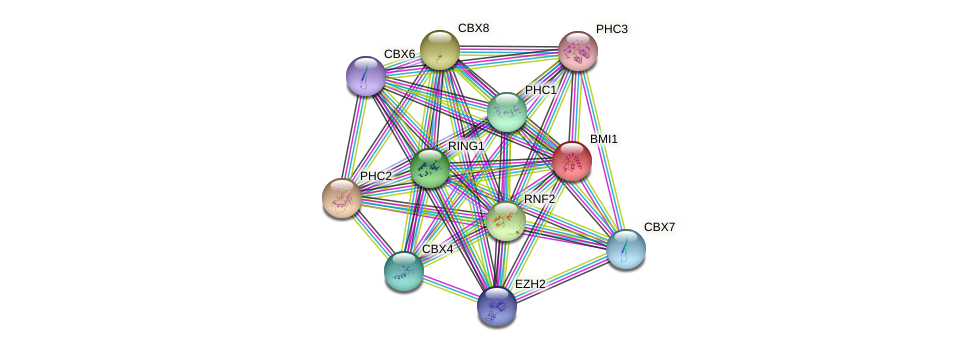 Protein-Protein network diagram for BMI1