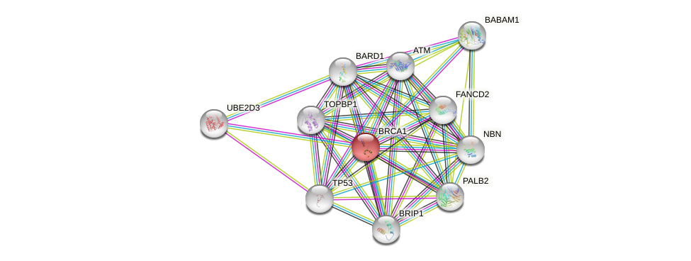 Protein-Protein network diagram for BRCA1