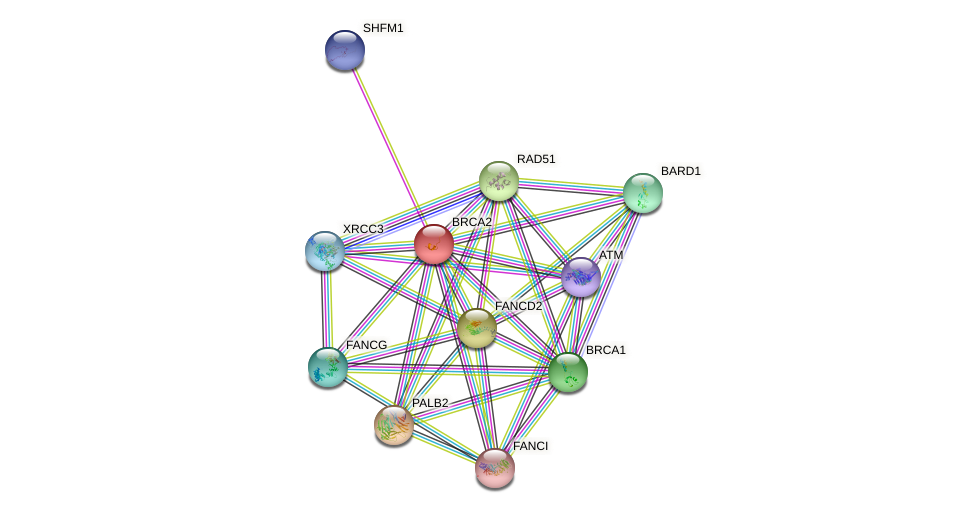 Protein-Protein network diagram for BRCA2