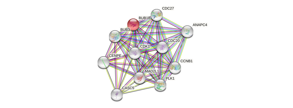 Protein-Protein network diagram for BUB1B