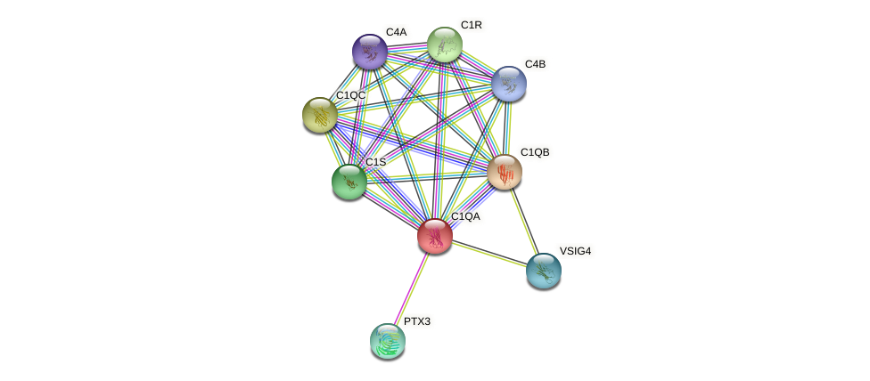 Protein-Protein network diagram for C1QA