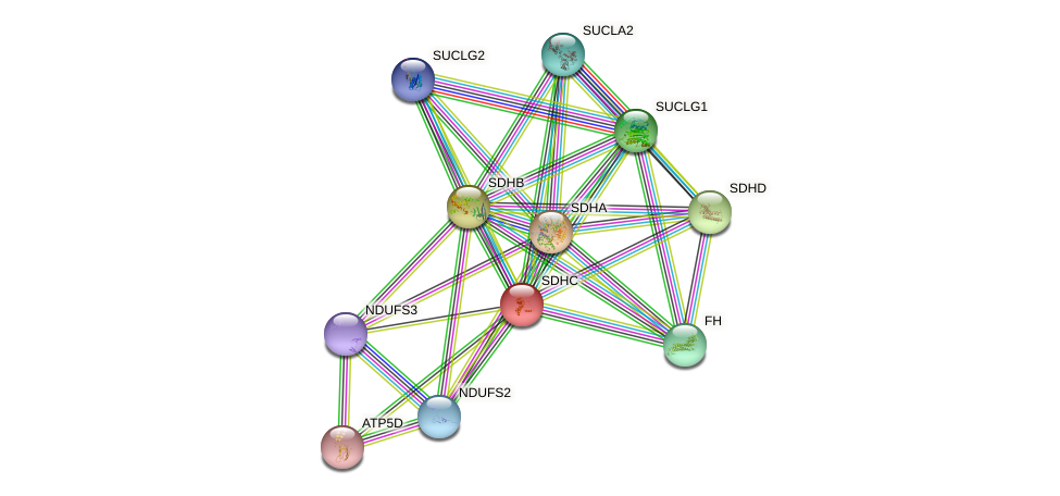 Protein-Protein network diagram for SDHC