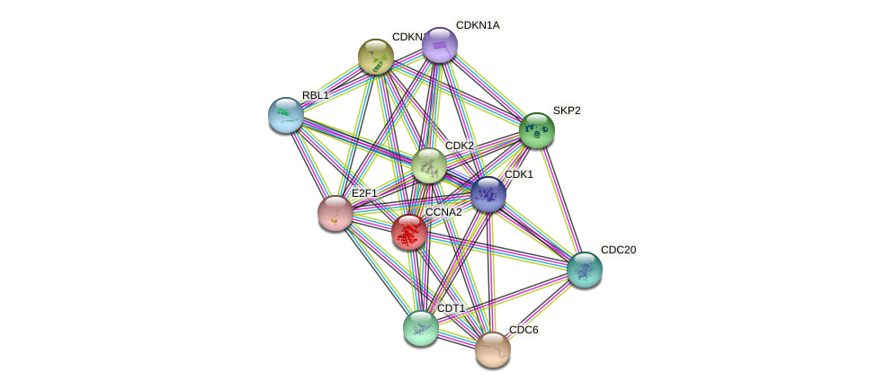 Protein-Protein network diagram for CCNA2