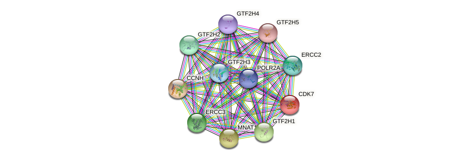 Protein-Protein network diagram for CDK7