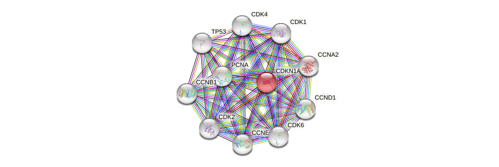 Protein-Protein network diagram for CDKN1A