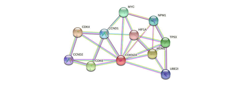 Protein-Protein network diagram for CDKN2A