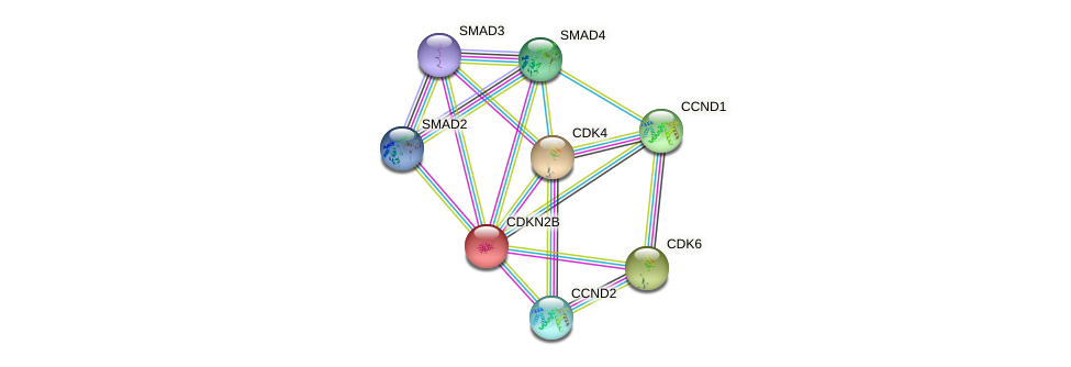 Protein-Protein network diagram for CDKN2B