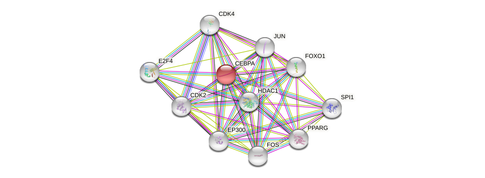 Protein-Protein network diagram for CEBPA