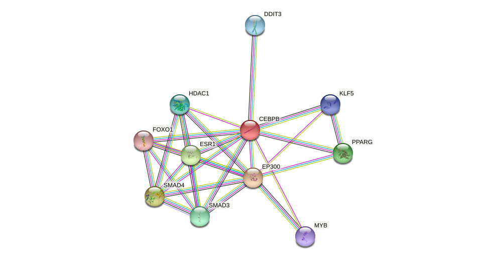 Protein-Protein network diagram for CEBPB