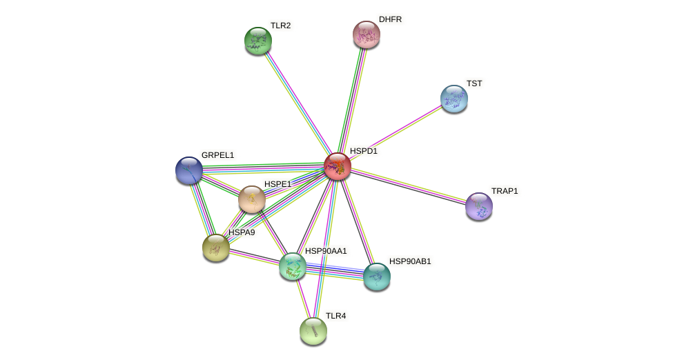 Protein-Protein network diagram for HSPD1
