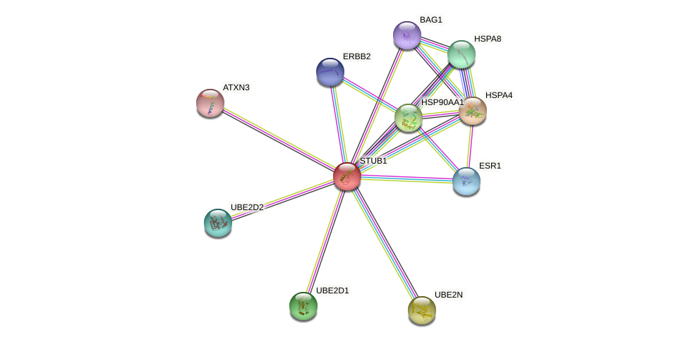 Protein-Protein network diagram for STUB1