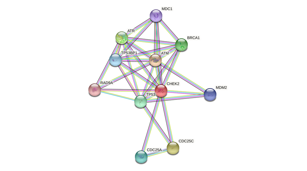 Protein-Protein network diagram for CHEK2