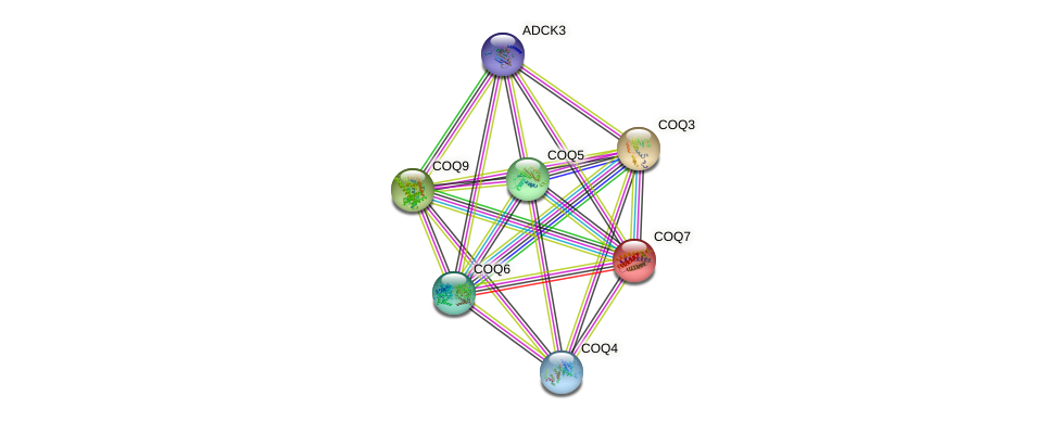 Protein-Protein network diagram for COQ7