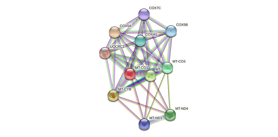 Protein-Protein network diagram for MT-CO1