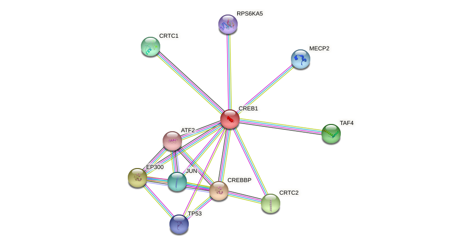 Protein-Protein network diagram for CREB1