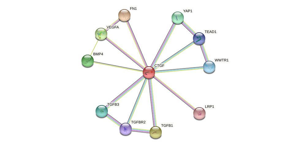 Protein-Protein network diagram for CTGF