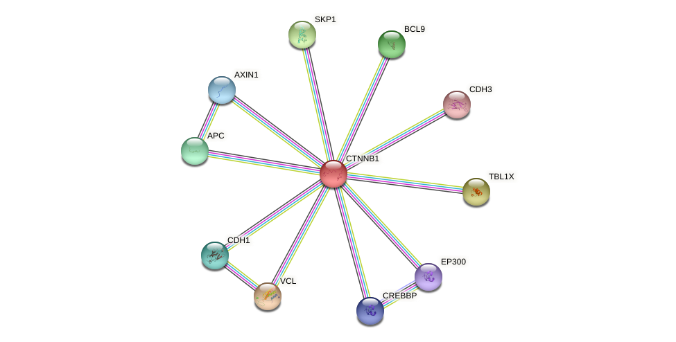Protein-Protein network diagram for CTNNB1