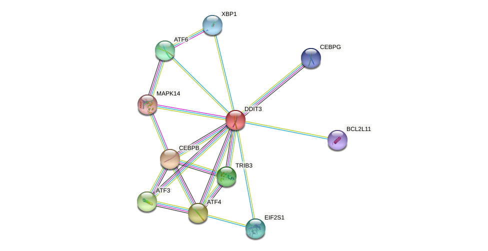 Protein-Protein network diagram for DDIT3