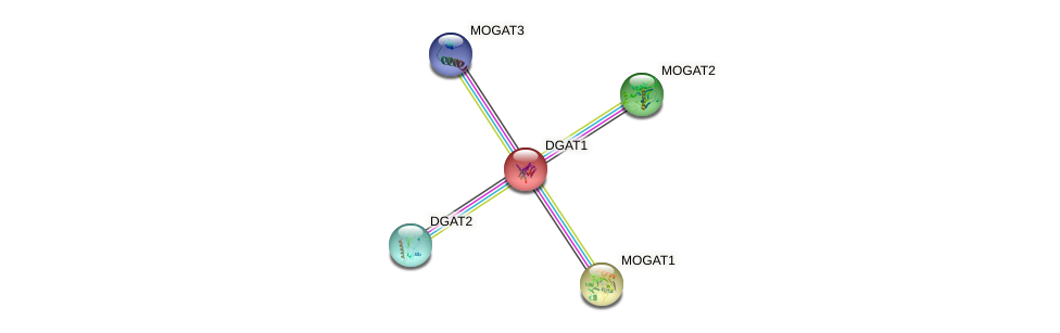 Protein-Protein network diagram for DGAT1