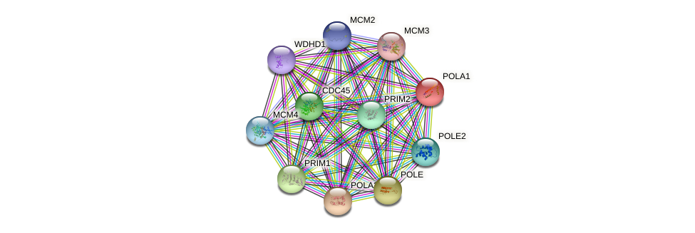 Protein-Protein network diagram for POLA1