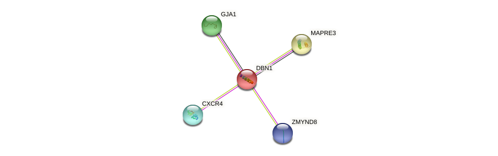 Protein-Protein network diagram for DBN1