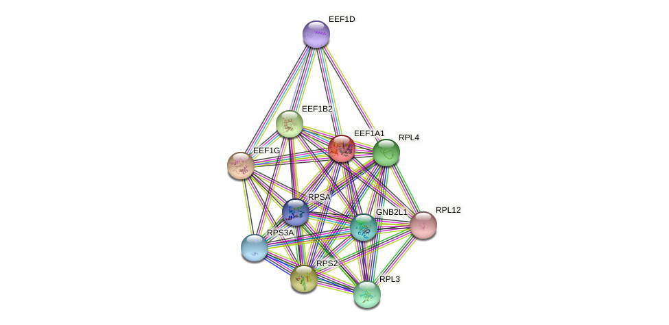 Protein-Protein network diagram for EEF1A1
