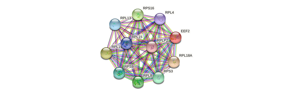 Protein-Protein network diagram for EEF2