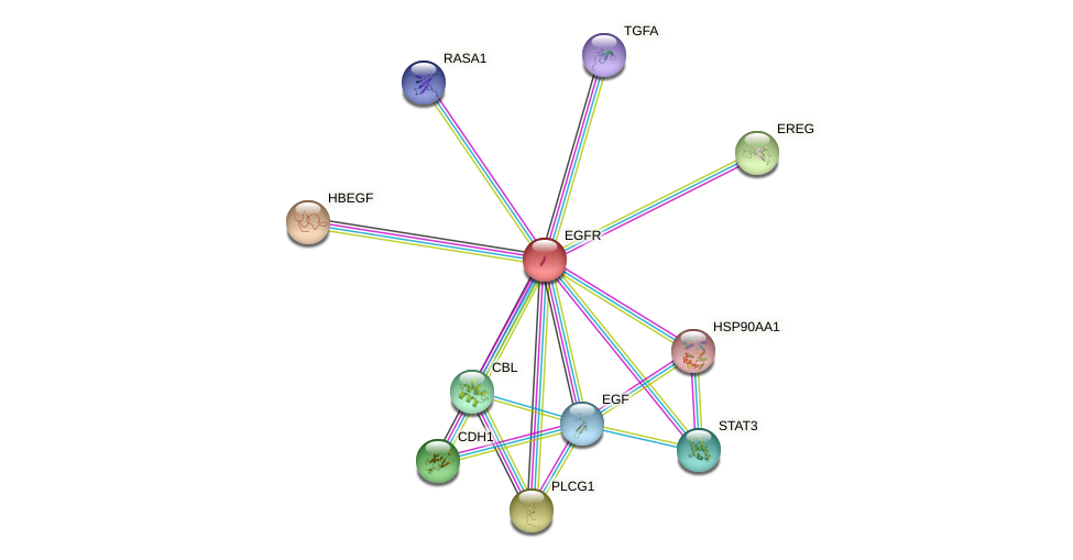 Protein-Protein network diagram for EGFR
