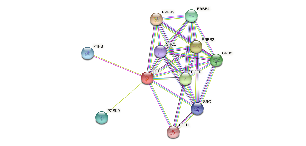 Protein-Protein network diagram for EGF