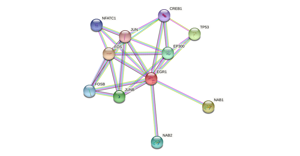 Protein-Protein network diagram for EGR1