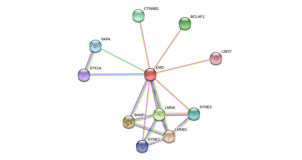 Protein-Protein network diagram for EMD
