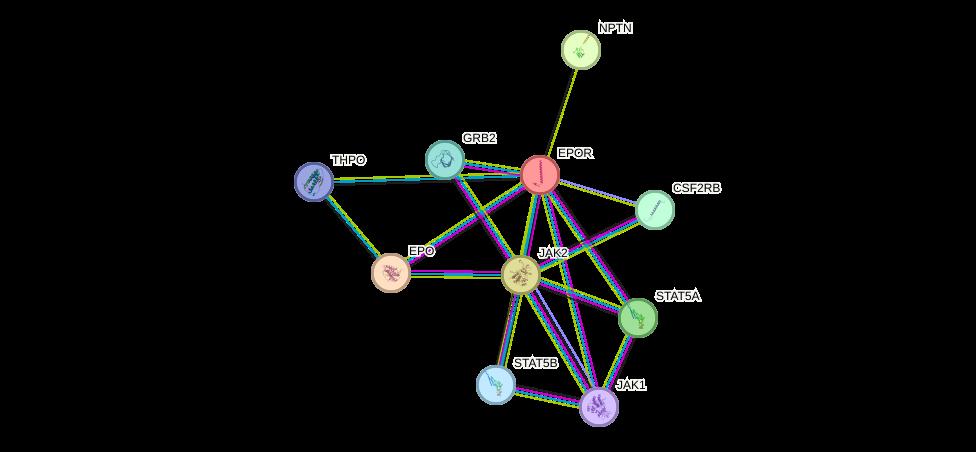 Protein-Protein network diagram for EPOR