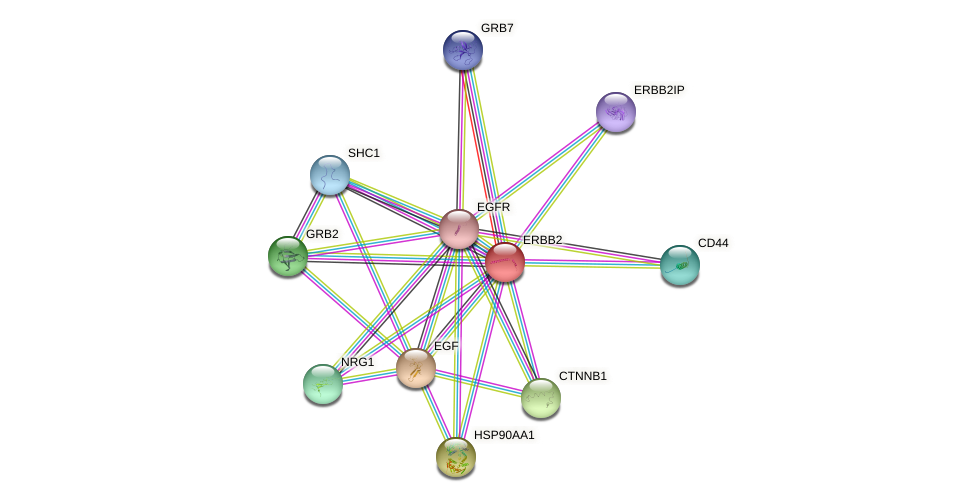 Protein-Protein network diagram for ERBB2
