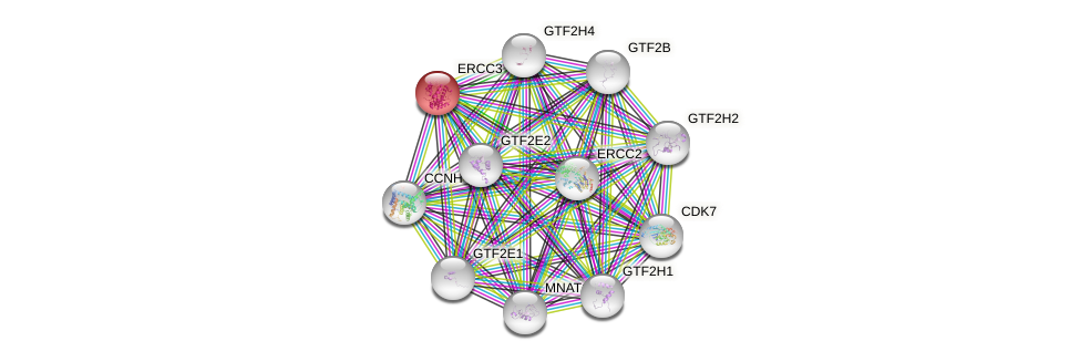 Protein-Protein network diagram for ERCC3