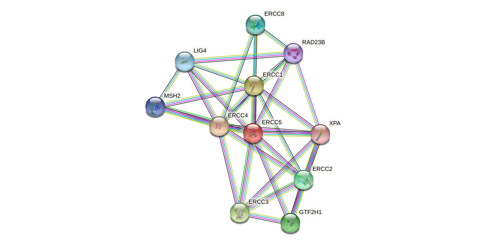Protein-Protein network diagram for ERCC5
